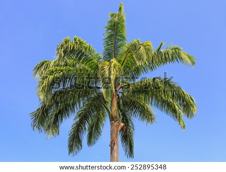 Palm tree on the background of a beautiful blue sky - stock photo