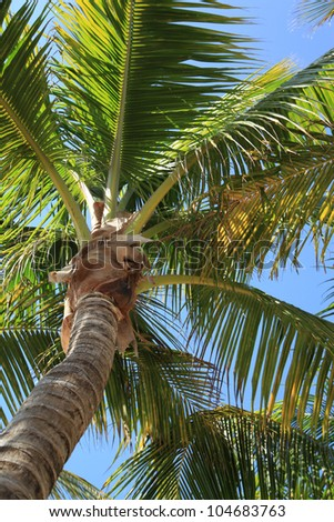 Palm tree on the background of  blue sky