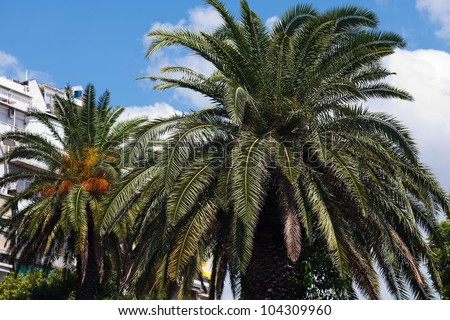 palm tree on the background of southern blue sky
