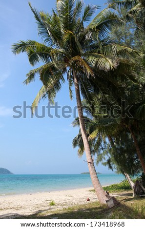 Palm tree on the beach - stock photo