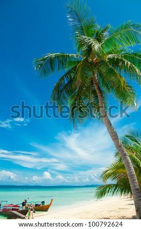 Palm tree on the beach, Phi-Phi Island, Thailand - stock photo