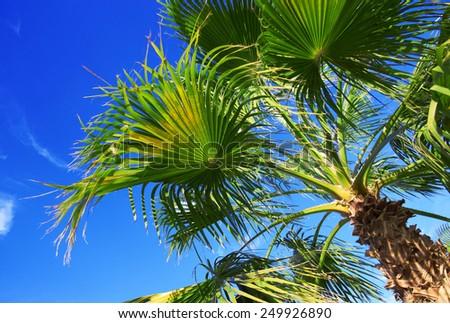 Palm tree on the blue sky - stock photo
