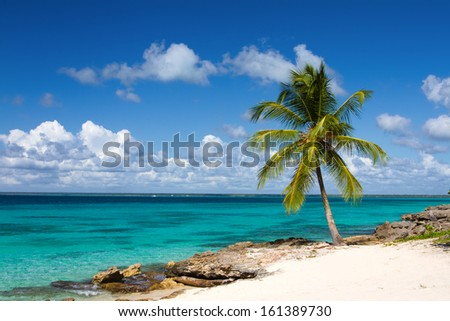 Palm tree on the tropical beach, Saona Island, Caribbean Sea