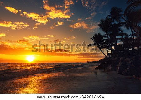 Palm tree on the tropical beach, sunrise shot - stock photo