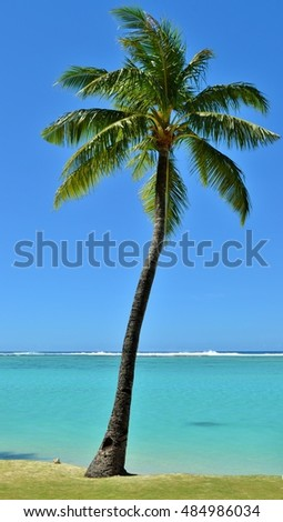 Palm tree on the tropical Pacific island of Guam.