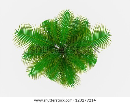 Palm tree on top view isolated - stock photo