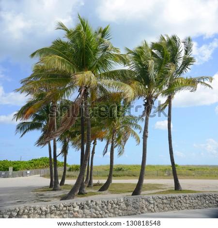Palm Tree on Tropical Beach, Key West, Florida, USA - stock photo