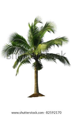 Palm tree on white background