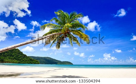 Palm tree over the beach - stock photo