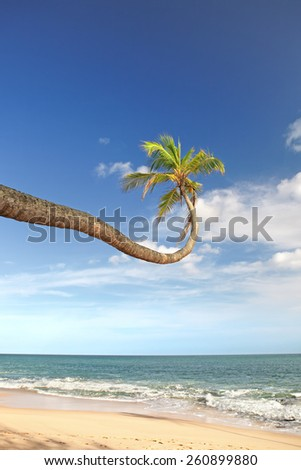 Palm tree over the ocean - stock photo