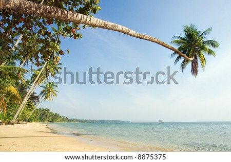 Palm tree over the sea.