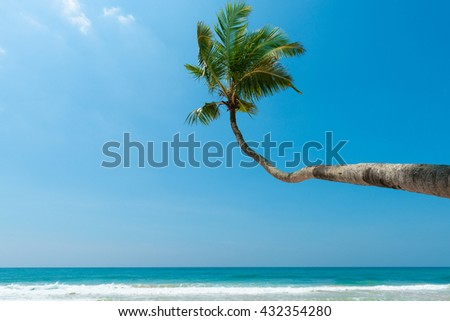Palm tree over the water on tropical ocean beach at sunny summer day - stock photo