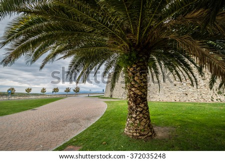 Palm tree overlaying a paved footpath in medieval town in Umbria, Italy - stock photo