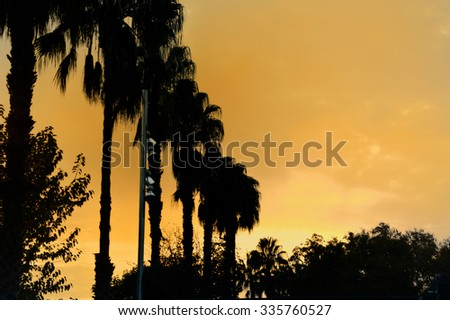 Palm tree photo taken with back lighting on sunset