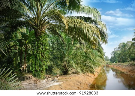 Palm Tree Plantation - stock photo