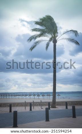 Palm Tree Playa de Palma vertical image. Playa de Palma, Mallorca, Balearic islands, Spain. - stock photo