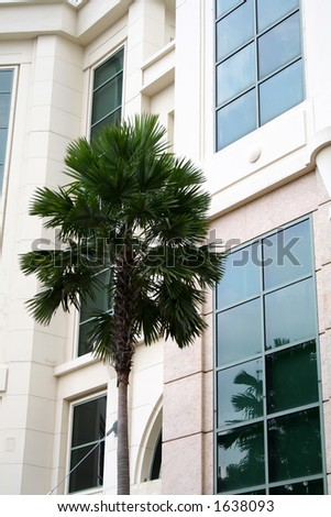 Palm tree reflecting off a building