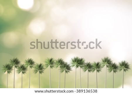 Palm tree row on blur natural background green color greenery bokeh sky sun light flare: Sunday holiday summer weekend illustration for Christian holy religion holiday design decoration greeting card - stock photo