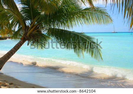 palm tree shading the shore on the Caribbean beach of Seona Island in the Dominican Republic with boat in the background - stock photo