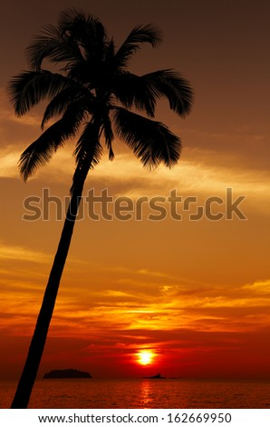 Palm tree silhouette at sunset, Chang island, Thailand - stock photo