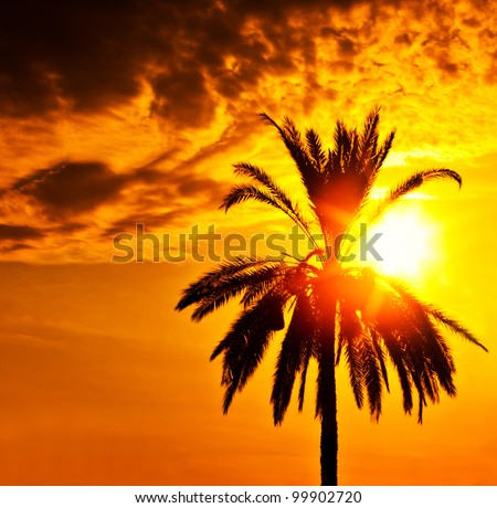 Palm tree silhouette over sunset, beautiful summertime holidays background, romantic tropical beach vacation, dramatic dark orange sky with bright sun light, peaceful nature landscape