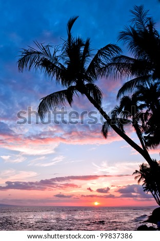 Palm tree silhouetted against a beautiful sunset.