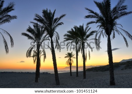 Palm tree silhouettes on Cabopino beach-Costa del Sol,at sunset. - stock photo