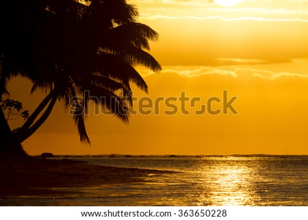 palm tree silhoutte on beach during sunset