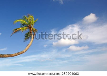 Palm tree stretches up to the white clouds in the blue sky