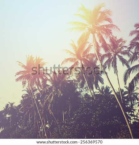 Palm tree sunset. Instagram effect (vintage) - stock photo