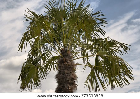 palm tree - treetop - stock photo