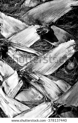Palm tree trunk / Palm tree bark / Close up texture of a palm tree. - stock photo
