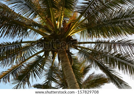 Palm Tree View Against Sunset Sky - stock photo