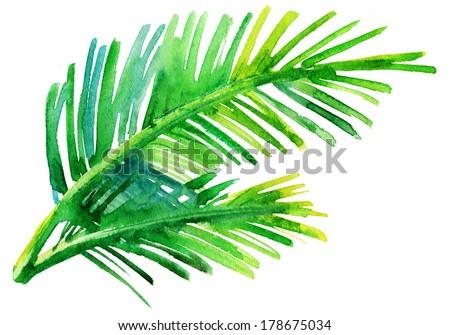 Palm  tree watercolor original painting. - stock photo