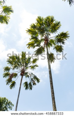 Palm tree with blue sky background on daytime