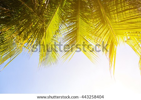 Palm tree with coconut on blue sky and orange lighting effect - stock photo