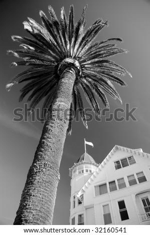 Palm tree with Hotel del Coronado in the background - stock photo