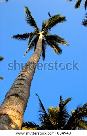 palm tree with moon and raven in image - stock photo