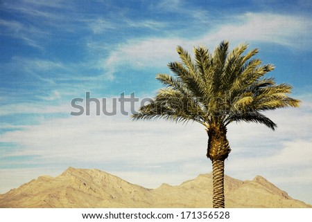 palm tree with mountains in the background with a vintage feel - stock photo