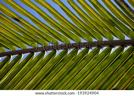 Palm Trees - stock photo