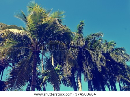 Palm trees against a clear blue sky with instagram-type filter added for retro, vintage effect. - stock photo
