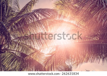 Palm trees against a sunset. Vintage style photo  - stock photo