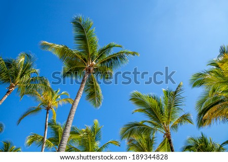 Palm trees against blue sky at sunset
