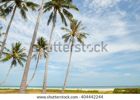 Palm trees against blue sky in Samui Thailand - stock photo