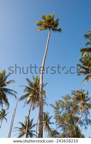Palm trees against blue sky.  (soft focus, shallow DOF, slight motion blur)  - stock photo