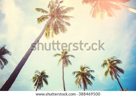 Palm Trees Against Blue Sky Toned Effect Nature Landscape Tropical Background Holiday Travel Design View Up - stock photo