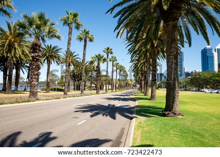 Palm trees along empty Riverside Drive next to Langley Park, Perth City, Western Australia