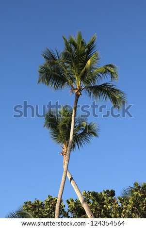 Palm trees and blue sky in Dominican Republic