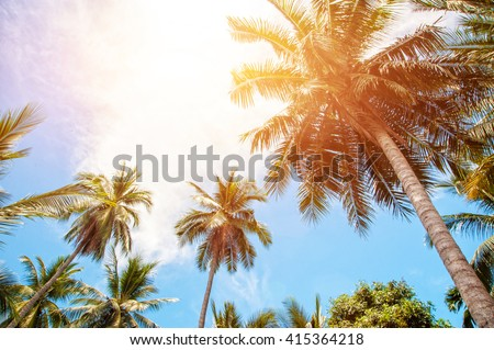 Palm trees and bright sun on blue sky background - stock photo