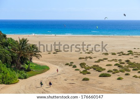 Palm trees and couple of people walking on Sotavento beach with kite surfers on ocean water, Fuerteventura, Canary Islands, Spain